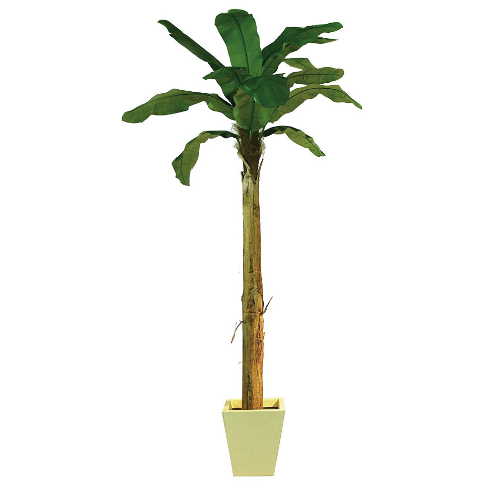 europalms bananenbaum 10088699 decoration. Black Bedroom Furniture Sets. Home Design Ideas